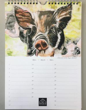 Schweine Kalender1